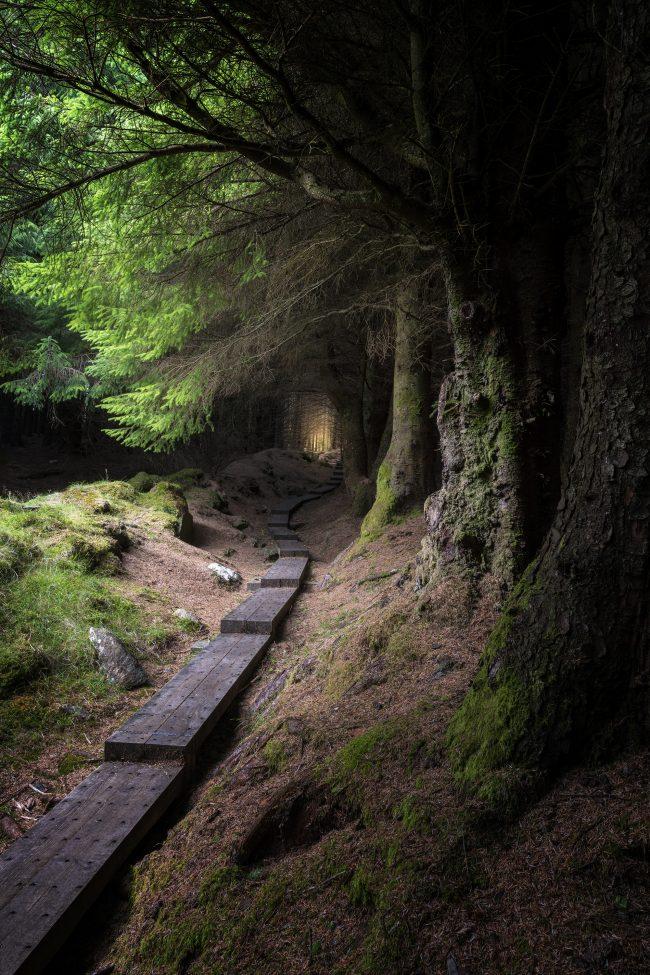 wicklow woods, ballinastoe woods